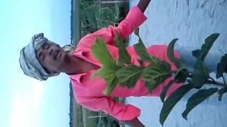bangla new singer robel
