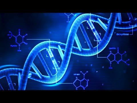 DNA - What is DNA? - Basics of DNA