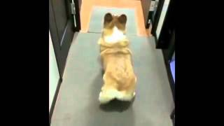 You Gotta Love Dogs   Dog Dances to Bubble Butt Vine By  majorlazer