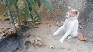 Funny cat videos / Cute kitten playing with other cats