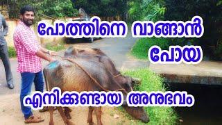 പോത്തിനെ വാങ്ങുന്നതിനു മുൻപ് ഒന്ന് ശ്രദ്ധിക്കണേ [ECO OWN MEDIA] Before Buying Buffalo Malayalam