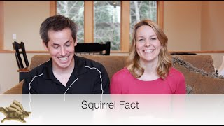 10 INCREDIBLE squirrel facts