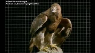 Download National Geographic Wild Birds of Prey ( Raptors, Hawks, Falcons ) | Documentary English S 3Gp Mp4