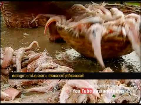 SHOKING VIDEO : Dry fish processing in very griminess condition | Asianet News Investigation