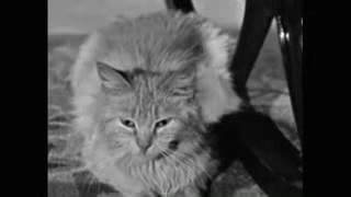 The Three Stooges 1943 S10E2 Dizzy Detectives