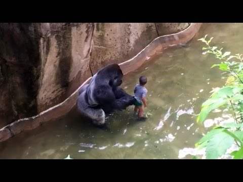 Xxx Mp4 Mom Of Boy Who Fell Into Gorilla Enclosure I Watch On My Kids Accidents Happen 3gp Sex