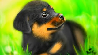 Digital speed painting realistic dog portrait sketchbook pro android galaxy note s pen