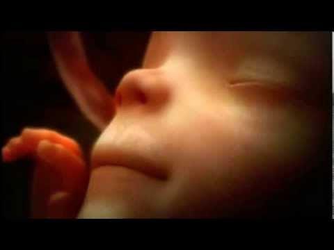 Life in the womb 9 months in some 4+ minutes