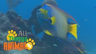 FISH |  Animals for children. Kids videos. Kindergarten | Preschool learning