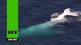 La ballena blanca Moby Dick 'existe' y surca las aguas de Australia