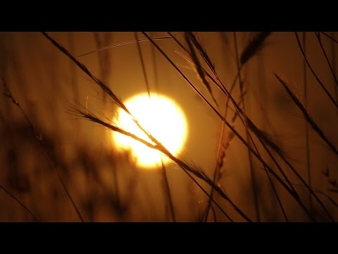 Xxx Mp4 Wild Grass Sunrise Time Lapse Royalty Free HD Stock Video Footage 3gp Sex