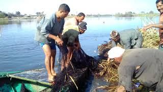 يوم مع الصيادين  احلى صيادين سمك نيلى فى مصر
