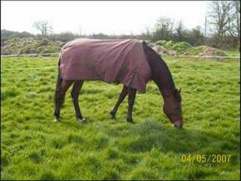 Xxx Mp4 My Horse Penny Xxx 3gp Sex
