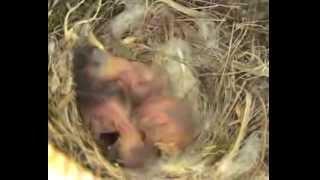 Il nido del passero in veranda