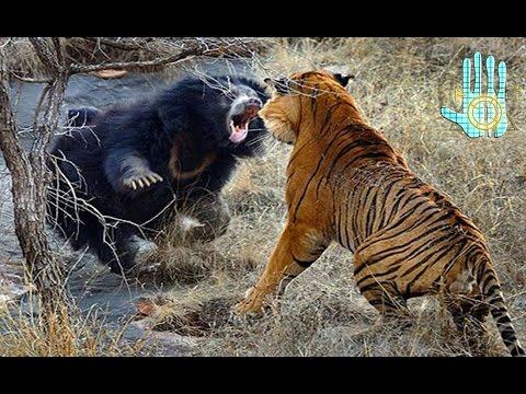 TOP 10 Batallas Épicas Animales