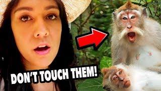 WARNING: Monkeys Bite!!! 🙉  | HONEYMOON IN BALI day 2 & 3  | Nikki in Real Life