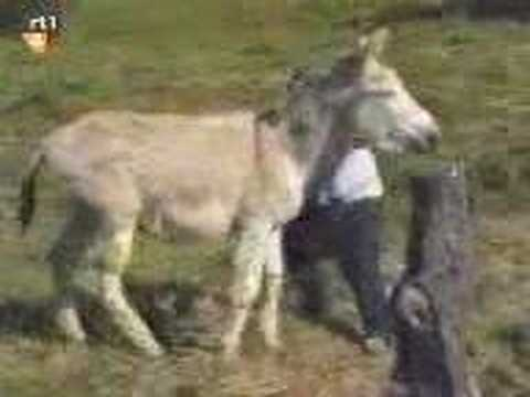Man chased by horny Donkey