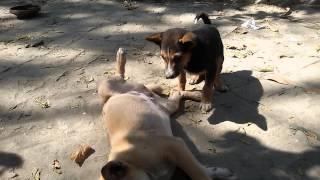 Lalu & Bulu Two Brothers 2