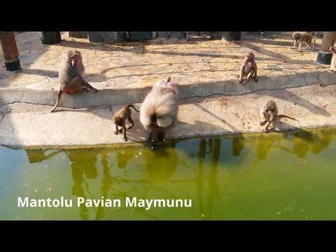 Darıca Hayvanat Bahçesi Faruk Yalçın Zoo