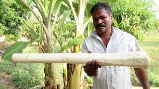 BIG BANANA STEM Cooking IN My Village    Natural Remedies for Kidney Stones   VILLAGE FOOD
