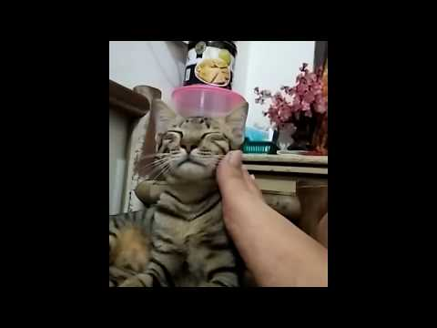 Video Gesek Gesek Pussy pake Jempol kaki