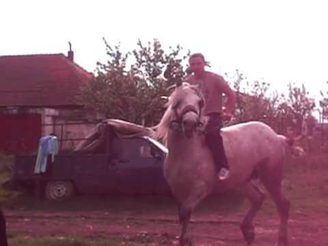 cel mai turbat cal si calaret di izvin timisoara
