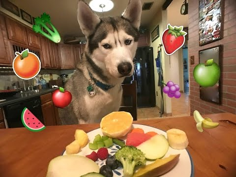 Gohan The Husky Trying Fruits & Vegetables WILL HE EAT IT