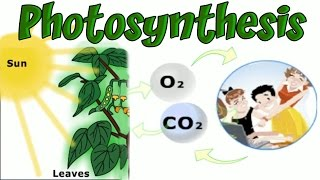 Plants and Photosynthesis, Learning Basic Biology, Interesting and Educational Videos for Children