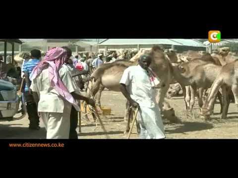 The Other Somalia Livestock