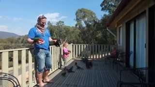 Hand Feeding Wild Australian Parrots