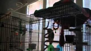 [ORIGINAL] Parrot Sings Let the Bodies Hit the Floor