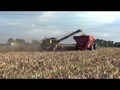 Picking Seed Corn in Southern Michigan with an Oxbo picker