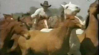 The Real Horse Whisperer, Monty Roberts 2of4