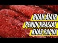 Download Video Download Buah Ajaib dari Papua Penuh Khasiat 3GP MP4 FLV