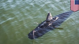 Robot shark: GhostSwimmer drone developed by U.S. Navy looks and swims like a shark