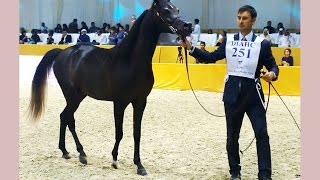 Dubai International Arabian Horse Championship 2015