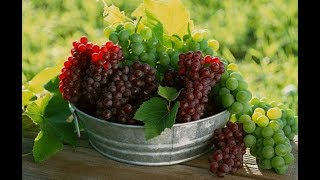 ضع الليمون مع العنب و التوت لن تصدق النتائج التي سيفعلها في جسمك !