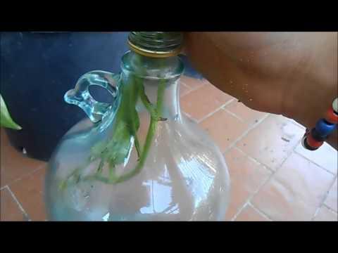 Xxx Mp4 POTOS In Bottiglia 3gp Sex