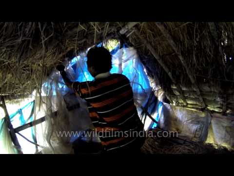 Xxx Mp4 Indian Tribal Man In The Living Quarters Of His Tree House 3gp Sex