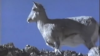 Asia Salvaje Himalaya - Discovery Channel Video