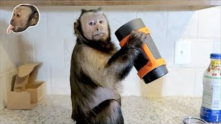 Monkey Chugs With A Clip Grip! $100 Giveaway