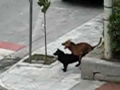 cani trombano allegramente per la via