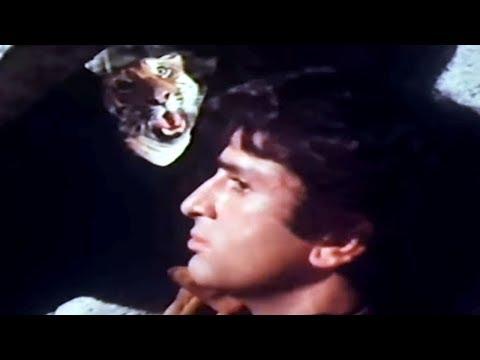 Xxx Mp4 Shashi Kapoor Jaanwar Aur Insaan Scene 3 15 3gp Sex