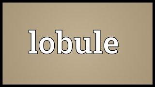 Lobule Meaning
