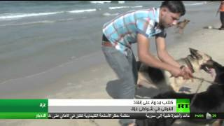 كلاب مدربة لإنقاذ الغرقى في غزة