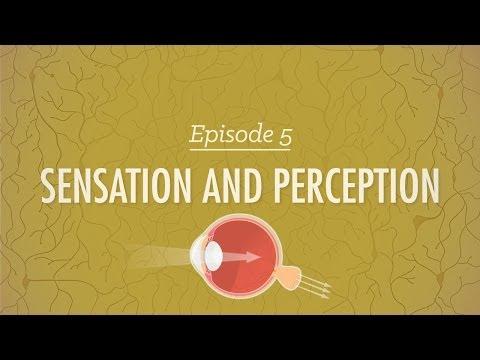 Sensation & Perception - Crash Course Psychology #5