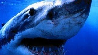 Alaskan Killer Shark - Nature Documentary (HD)