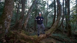 EXPLORING The Aokigahara Japanese Suicide Forest! (We Found This)