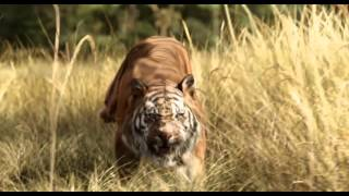 Trailer Legendado Oficial Mogli - O Menino Lobo - 14 de abril nos cinemas