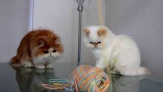 Kitties vs. Yarn